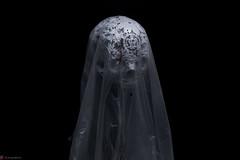 IMG_5104 (m.acqualeni) Tags: sculpture metal dark de dead death skull noir mort gothic goth manuel morbid alain gothique mtal fond tete tte morbide belino acqualeni
