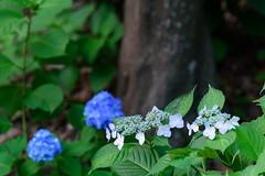 32Yamada Pond Park (anglo10) Tags: flower japan
