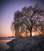 Swaying in the Breeze (Iskou-Hee) Tags: toronto tree nature beauty night bluffspark treesubject