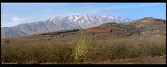 Israel, Spring Time Golan Heights 2012 (xnir) Tags: landscape israel spring heights golan 2012 nir hermon xnir nirbenyosefxnir