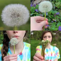 21/365 (itsmeganduhh) Tags: original boy summer flower love girl coral outside lyrics spring song dandelion tiedye braid wishing