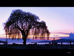 (sunflower_lotus) Tags: ocean sunset sky tree silhouette vancouver clouds colours willow kitsilano