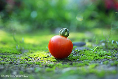 (nodie26) Tags: red food fruits vegetables fruit tomato dish fresh greens vegetarian dishes veg    vegetarianism