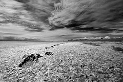 Ominousity (Prestidigitizer) Tags: sky seaweed beach clouds ir wideangle infrared ultrawide soe ionabeach dogprints pentaxk10d mygearandme mygearandmepremium mygearandmebronze mygearandmesilver ringexcellence sigma816mm
