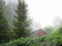 sommer,regen (adolf fischer) Tags: summer rain sommer regen me2youphotographylevel2 me2youphotographylevel3 me2youphotographylevel1 me2youphotographylevel4