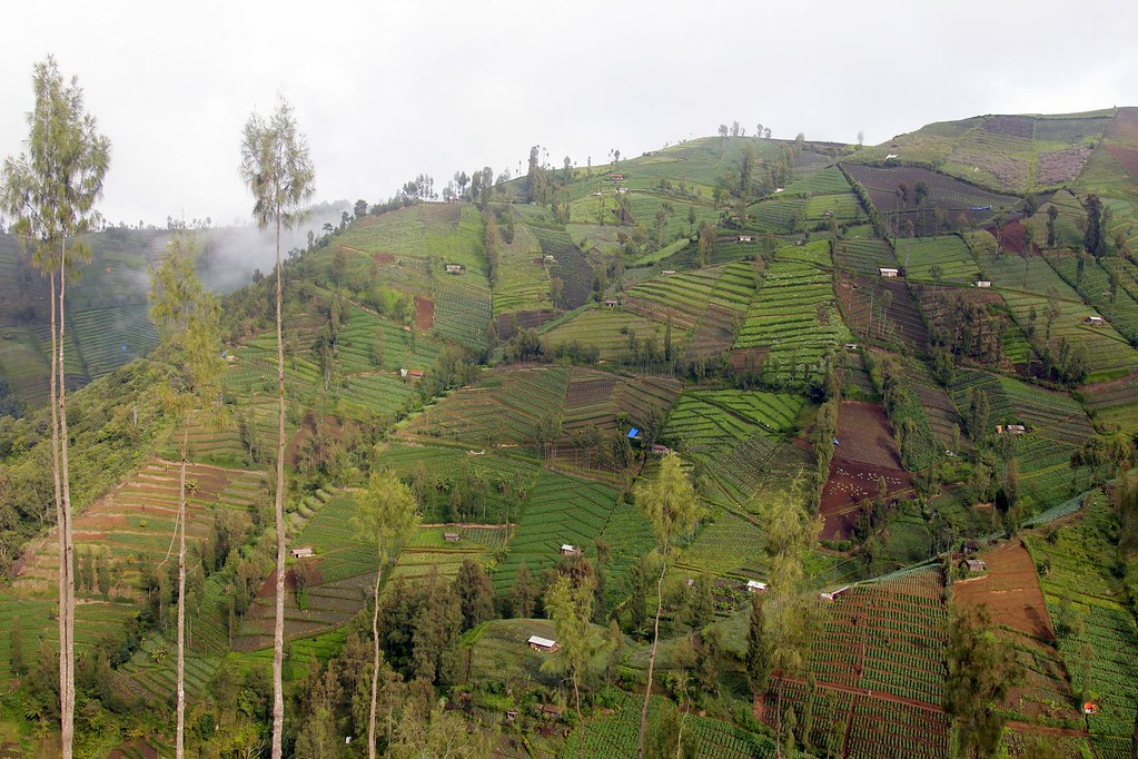 Lush farmland, Malang, East Java, Indonesia