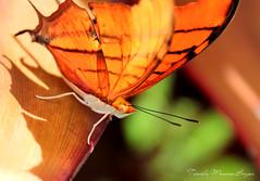 (Trsila Moscoso) Tags: macro natureza beleza cor colorido delicado suavidade