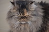 Solei Bad (Kamian) Tags: cat bad mina gato angry gata brava mala kittie