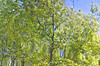 Reflected Tree II (Jon Narbett) Tags: reflection dpsgreen