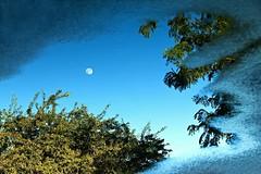 Puddlescape (gordeau) Tags: trees sky moon reflection puddle gordon thumbsup ashby flickrchallengegroup flickrchallengewinner thechallengefactory gordeau
