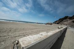 (Tim C. McLaughlin) Tags: ocean sanfrancisco california park city beach golden arthur tim nikon gate c tress mclaughlin daly d800 1424