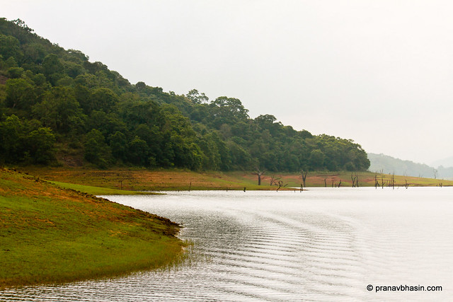 Ripples At Periyar Tiger Reserve, Thekkady, Kerala