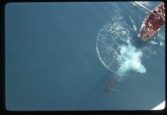 Diving, Port-Au-Prince, 1975 (Rob Ketcherside) Tags: foam oar scissorkick
