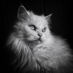 (windrides) Tags: light shadow white black window pen cat dark square lumix persian darkness olympus greece 14mm epm1
