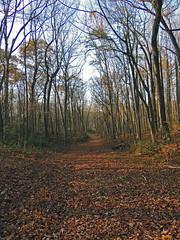 An Autumn Evening (Bonnie Ott) Tags: woods forest pigtail triadelphia poem poetry bonniecoatesott