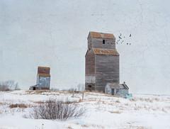 Prairie Twins (Harry2010) Tags: winter snow texture abandoned truck wooden saskatchewan 13 prairies decayed kipling grainelevators