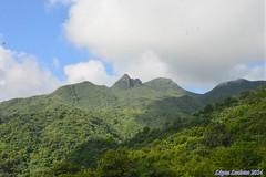 PERFIL HUMANO EN MONTAÑA DE RESERVA FORESTAL:EL YUNQUE. PUERTO RICO (LOPEZ LUCIANO 4,000,000 VISITAS.GRACIAS....) Tags: en de puerto perfil rico montaña humano reserva yunque forestalel