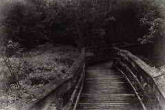 The Way In (hollykl (Sorry. Very busy this week. On/Off)) Tags: texture monochrome photomanipulation digitalart boardwalk wetland meadgardens arteffects