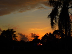 Friday the 13th Sunset (Jim Mullhaupt) Tags: pictures camera pink blue sunset red wallpaper sky orange sun color tree weather silhouette yellow clouds landscape photography gold evening photo nikon flickr sundown florida dusk snapshot picture palm exotic p900 tropical coolpix bradenton geographic endofday cloudsstormssunsetssunrises nikoncoolpixp900 coolpixp900 nikonp900 jimmullhaupt