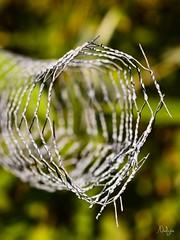 Rond ou ovale ? (Nadge) Tags: sculpture de fil vert wires barbed fond fer bramble rond barbel mtallique ovale