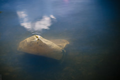 Plastic Bag In Water (donlunzo16) Tags: city 2 lake film water trash swimming bag munich lens town nikon df raw nef floating x plastic pack filter nd rubbish nikkor 58mm vignette afs f114 seehaus vsco d