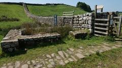 View West towards Housesteads Fort (Vercovicium), near Haltwistle, Northumberland, England, UK, 6/2016 (SteveT0191) Tags: uk england flickr roman northumberland hadrian romanempire hadrianswall housesteads geolocated