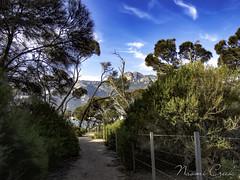 naomi160419-085 (Naomi Creek) Tags: mountain beach island path tasmania tress flinders fotheringate
