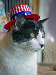 Big_02 (AbbyB.) Tags: pet animal cat newjersey feline shelter shelterpet petphotography easthanovernj mtpleasantanimalshelter