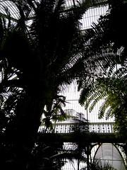 Palms (1Q89) Tags: white house black tree london glass kew nokia palm ceiling royalbotanicgardens