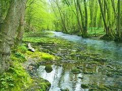 Dhünn (Sophia-Fatima) Tags: forest river fluss wald bergischesland altenberg märchenwald dhünn ferrytail