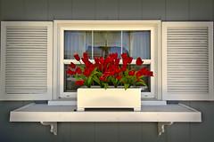 Roses in the window on Balboa Island (Robert Jaros) Tags: roses window newportbeach balboaisland canon7d tokina1116mmf28