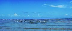 Revoada - Flight - Vol - Vuelo (ivannave) Tags: blue sea brazil sky gua azul brasil garden mar sand areia flight pssaro cu bleu jardim bahia vol enchantment encanto voar vuelo enchant revoada ivannave