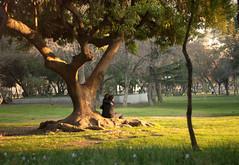 Tree hugging (TheFutureIsUnwritten) Tags: chile park parque santiago tree arbol couple pareja forestal