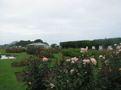 Robbins Rose Garden