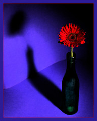 Flower In A Bottle (david.gill12) Tags: shadow flower