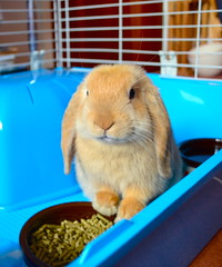 This is MY food Mummy! (mylo_rabbit) Tags: sleeping food pet baby cute rabbit bunny bunnies love animal dinner ginger yummy furry friend nap yum tea sweet sleep guard dream handsome fluffy dreaming sleepy snooze sweetie bun mylo snuggles houserabbit snoozing