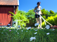 Holiday (Ulf Bodin) Tags: summer holiday skne sweden lawn sverige semester sommar lawnmover grsklippare tusenskna lawndaisy everd sommarstlle canoneos5dmarkii grsklippning