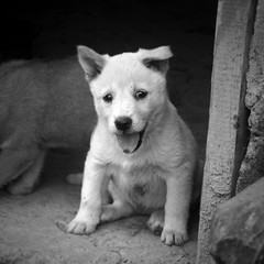 Puppy _ Longji (Dragon's Backbone) Rice Terraces (SteMurray) Tags: china travel rice guilin yangshuo terraces dragons explore murray ste backbone yangshou longji