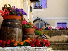village de Caille 2 (b.four) Tags: flower fleur village fiore paese coth caille cherryontopphotography rubyphotographer mygearandme mygearandmepremium ruby10 ruby15 hautpaysgrassois rubyinvite ruby20