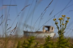 Dungeness Beach. (ziggystardust111) Tags: sky flower grass kent moody colours stones dungeness grasses colourful fishingboat tones shepway 450d wwwvincewinterphotographycouk ziggystardust113hotmailcouk