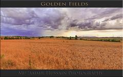 Golden Fields (Muzammil (Moz)) Tags: uk lincolnshire moz wheatfield lanashire canon7d muzammilhussain