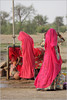 water, baisakhi (nevil zaveri (thank you for 15 million+ views)) Tags: zaveri portrait woman women collecting water fair festival peopleatwork people thar jaisalmer rajasthan india blog photography lady images stockimages red pink baisakhi rural clay pot pots bangles religious rituals handpump waterpump pump portraits nevil ghaghara nevilzaveri stock photo colors colours