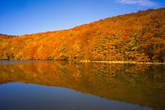 Autumn Reflections (moaan) Tags: autumn lake color digital reflections utata aomori 2012  towada 21mm superangulon colorsofautumn f34  leicasuperangulon21mmf34 tsutanuma ricohgxr  gxrmounta12 laketsuta