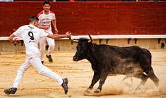 IMG_9178 (J.Gargallo) Tags: espaa canon eos concurso vacas castelln comunidadvalenciana anillas eos450d castellndelaplana canonefs18200