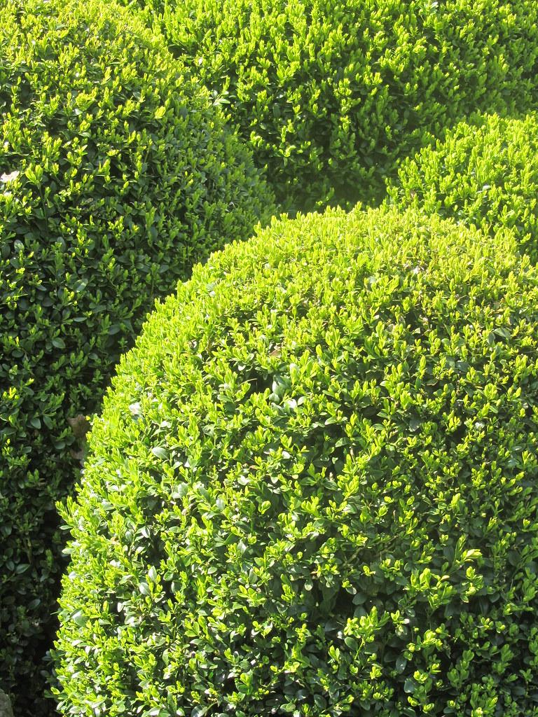 the world 39 s best photos of buchsbaum and garden flickr. Black Bedroom Furniture Sets. Home Design Ideas