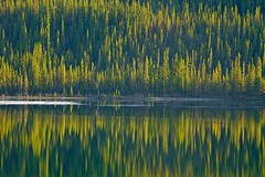 Evening Light at Big Fox Lake - Tokina AT-X 100-300mm f4 MF Lens & Metabones N/F Adapter (MIKOFOX  Catching Up!) Tags: canada reflection ice water forest landscape spring may yukon spruce 3000mm xt1 fujifilmxt1 mikofox tokinaatx100300mmf4mflensmetabonesnfadapter