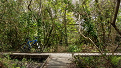 IMG_4427a (Photopedaler) Tags: bicycle naturereserve boardwalk cornishcycling