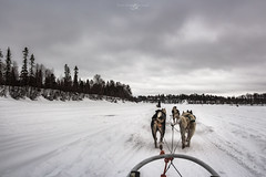 Never Giveup (Reuns) Tags: cloud dog snow nature animals finland husky power pics lapland strength cloudscape sleddog sledge laponie