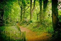 The Deep Dark Woods... (h_cowell) Tags: wood trees fence woodland path panasonic nik 20mm tiltshift efex gx7