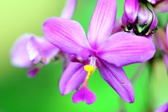 colors (Alberto Quintal Valencia) Tags: flower nikon d300s